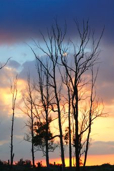 Free Trees At Sunset Royalty Free Stock Photo - 6365575