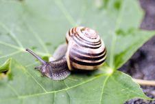 Free Snail Walk Stock Photos - 6365843