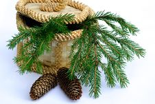 Branch Fir-tree With Pine Cone Royalty Free Stock Image