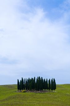 Free TUSCANY Countryside, Landscape With Cypress Stock Photo - 6366720