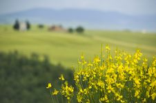 Free TUSCANY Countryside, Blooming Bush Stock Photography - 6367032