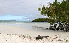 Free Marine Iguana Stock Images - 6367534