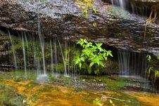Free Small Creek Royalty Free Stock Image - 6368406