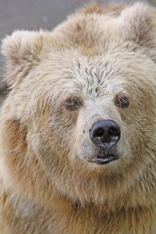Free Bear Stock Images - 6368664