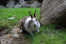 Free Rabbit Stock Photos - 6368793