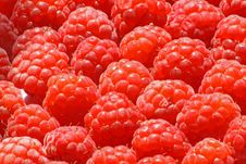 Free Raspberry Background Royalty Free Stock Image - 6368836