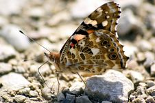 Free Butterlfy On Gravel Stock Photos - 6369013