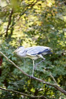 Free Heron Stock Photography - 6369222