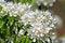 Free Flowering Pear. Spring Royalty Free Stock Photo - 63602785