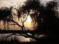 Free View Through A Willow Royalty Free Stock Photo - 6374015