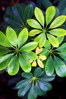 Free Petals Petals And More Petals Stock Image - 6370011