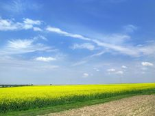 Yellow Rape Stock Photography