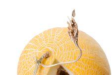 Free Melon Isolated On White Royalty Free Stock Photos - 6370668