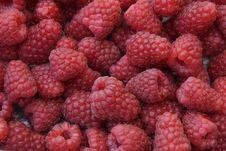 Free Raspberries Royalty Free Stock Photos - 6370838