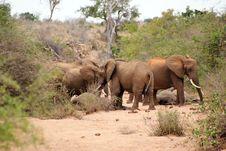 Free Elephants Resting Stock Photo - 6370850