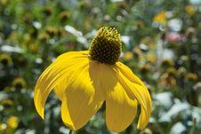 Free Flower Stock Image - 6372181
