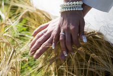 Free Hands Of Bride And Groom Royalty Free Stock Photo - 6373015