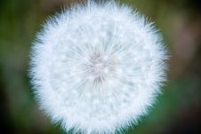 Free Dandelion Orb Stock Image - 6373401
