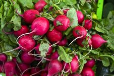 Free Bunch Of Radishes Royalty Free Stock Images - 6374199