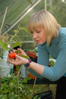 Free Attractive Girl Tending Tomatoes Royalty Free Stock Photos - 6374848