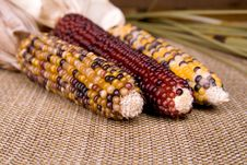 Free Indian Corn Stock Photography - 6375332