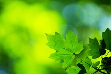 Free Green Leaves Background Stock Photography - 6376172