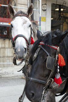Free Horses Stock Image - 6377061