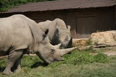 Free White Rhinos Stock Photo - 6377100