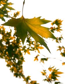 Autumn Leaves Over White Stock Images