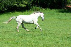 Free White Horse Running Stock Photo - 6378200
