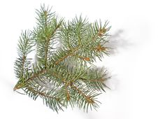 Free Pine Branch Stock Images - 6378954