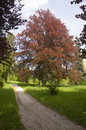 Free Solitaire Tree Near To The Footpath Royalty Free Stock Images - 6387289