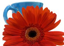 Isolated Orange Flower With Blue Cup Clipping Path Stock Images