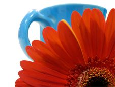 Free Isolated Orange Flower With Blue Cup Clipping Path Royalty Free Stock Photo - 6380885