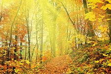 Free Autumn Gold Stock Images - 6381784
