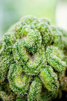 Free Brain Cactus Stock Images - 6382254