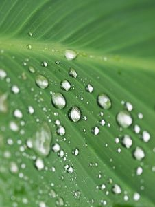Free Droplets On Leaf Royalty Free Stock Photo - 6383975