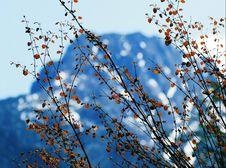 Free Snow Mountainous Royalty Free Stock Photo - 6384685