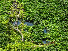 Ivy Window Stock Photography