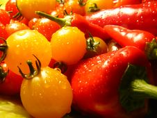 Free Garden Stuff Stock Images - 6388204