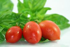 Free Basil And Tomatoes - Close Up Royalty Free Stock Photography - 6388647