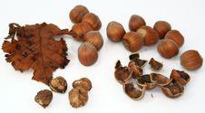 Free Hazelnuts Stock Photos - 6388753