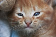 Free Little Kitten Photo Royalty Free Stock Photos - 6389168