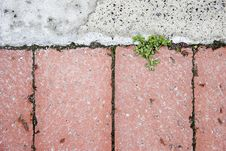Free New Growth Breaking Through Paving Royalty Free Stock Photos - 6389618