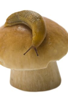 Free Snail On A Cep Royalty Free Stock Images - 6389869