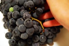 Free Black Grapes And Hand Stock Photography - 6389962