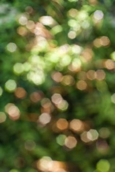 Natural Green Blurred Background Royalty Free Stock Images