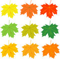 Free Autumn Leaves Vector Stock Photography - 6393082