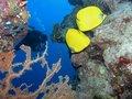 Free Coral Scene Royalty Free Stock Photos - 6398028