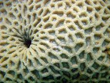 Free Coral Royalty Free Stock Photos - 6390898